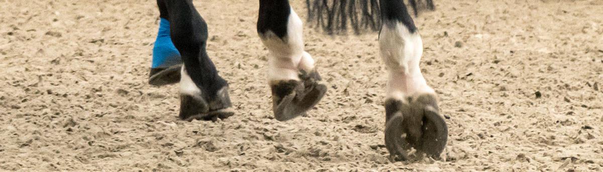 pris ormekur hest